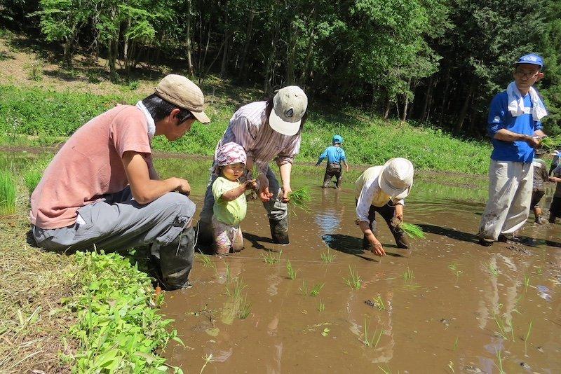 谷津田での田植え体験