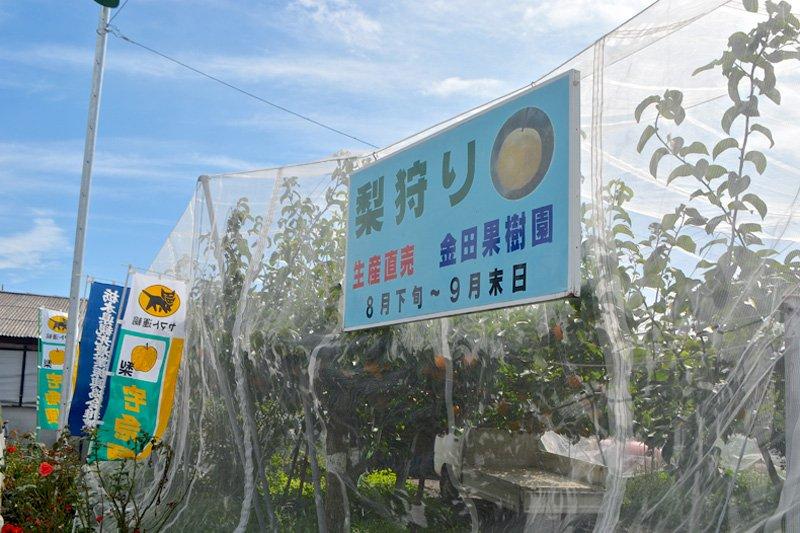 「金田果樹園」